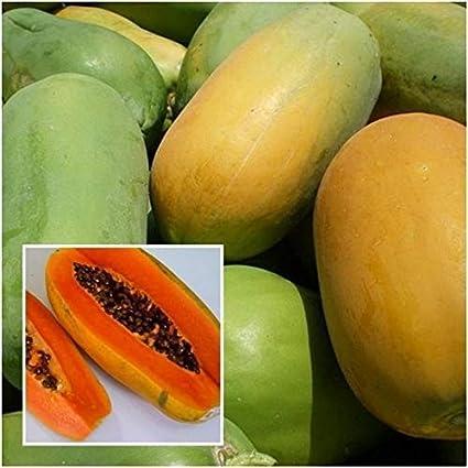 PLATFIRM Germinación de Las Semillas: 50 Semillas de Papaya: Holanda 10,25,50 Semillas, Seed Fruta de la Papaya, tailandés Planta de jardín, Pulpa Dulce