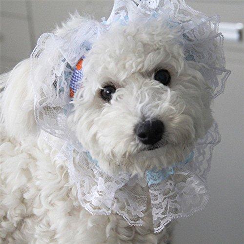 2-pcs-blue-hat-cap-sunbonnet-small-pets-princess-outdoor-accessories-clothes-party-costumes-fancy-pe