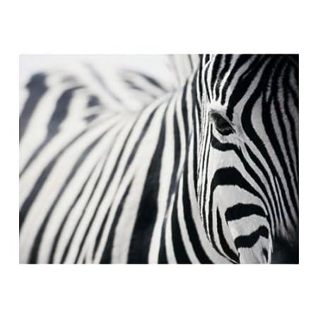 Ikea pjatteryd zebra picture photo wall art