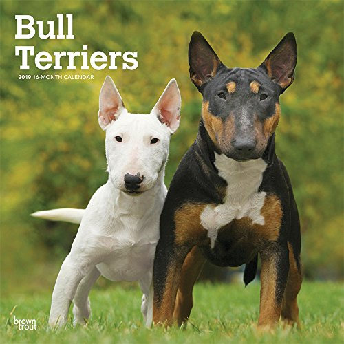 Bull Terriers 2019 12 x 12 Inch Monthly Square Wall Calendar, Animals Dog Breeds Terriers (Multilingual Edition) ()
