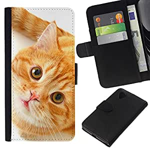 Stuss Case / Funda Carcasa PU de Cuero - Orange American Shorthair Cat - LG Nexus 5 D820 D821