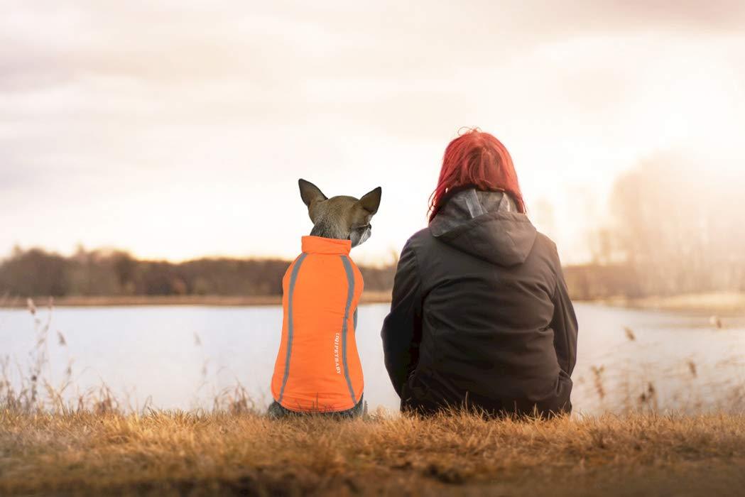 Idepet Impermeable Abrigo para perros Chaleco cálido Ropa Correa ...