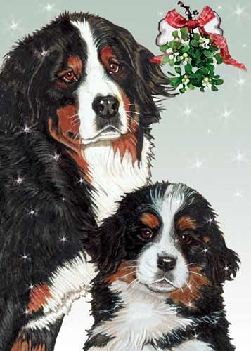 bernese mountain dog christmas cards 10 holiday cards with white envelopes adorable