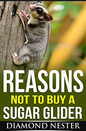 (Reasons Not to Buy A Sugar Glider: A short guide on what to expect when purchasing one of these amazing marsupials.)