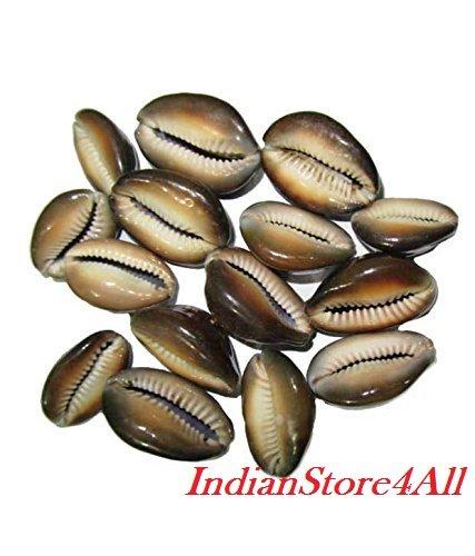 IndianStore4All Set Of 11 Rare Brown Kauri / Kaudi / Kawdi /Shell Goddess Lakshmi Blessing (Goddess Shell)