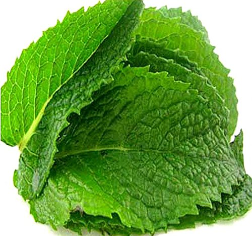 - PEPPERMINT MINT Seed - MENTHA MINT SEEDS - Medicinal and Cosmetic - FRAGRANT & WARM - Makes Great Cup of Tea (090000 Seeds -  1/4 oz)