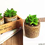 CHICTRY-Pack-of-6-Mini-Artificial-Echeveria-Succulent-Picks-Textured-Unpotted-Assorted-Faux-Succulent-Plants-in-Different-Flocked-Green-DIY-Flower-Arrangement-Making