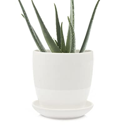 Chive - Big Dyad, Large 5 Inch Succulent Pot and Saucer - Ceramic Plant Pot with Drainage Hole and Detachable Saucer, Tray and Dish (White): Home & Kitchen