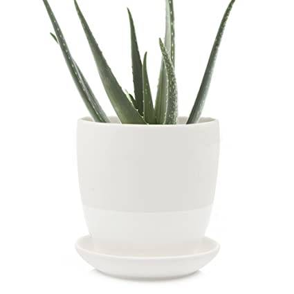 Chive   Big Dyad, Large Succulent And Cactus Pot And Saucer   5u0026quot;  Ceramic