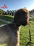 Tellpet Real Leather Dog Collar, Brown, Small