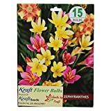 Kraft Seeds Zephyranthes Flower Bulb