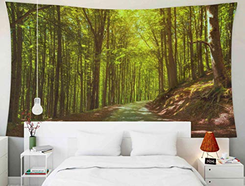 - Shorping Huge Tapestries, 80x60Inches Hanging Wall Tapestry for Décor Living Room Dorm Misty Forest or Beechwood and Road Foreste Casentinesi National Park Tuscany Italy Europe