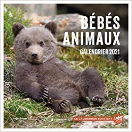 Amazon.fr   Calendrier mural Bébés animaux 2021   Collectif   Livres