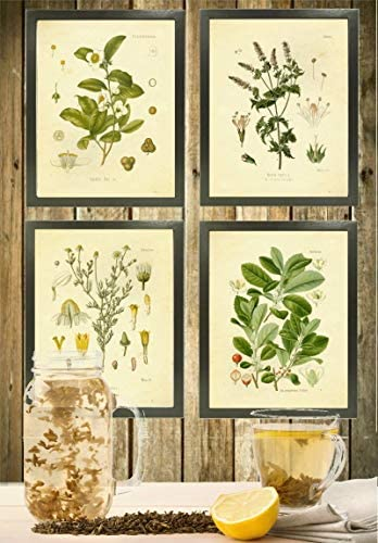 home, kitchen, wall art,  posters, prints 11 discount Botanical Prints Tea Herbalism Herbs Vintage Wall Art promotion