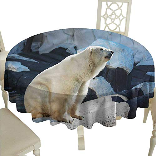 Potter Park Zoo Halloween (crabee Fitted tablecloths Zoo,Polar Bear in Park Rocks,Round)