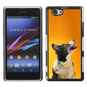 PC/Aluminum Funda Carcasa protectora para Sony Xperia Z1 Compact D5503 Border Collie Orange Smart Dog Canine / JUSTGO PHONE PROTECTOR