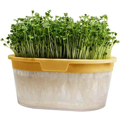 $14.99 Microgreens Growing and Sprouting Kit – Non-GMO Broccoli and White Radish Organic Vegetable Seeds with Reusable Germination Tray for Your Indoor Soil-Free Hydroponic Garden – Para Living 2019