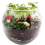 TerraGreen Creations - Easy Grow Complete Fairy