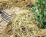 EZ-Straw Just Straw Clean Processed Straw – Multi Purpose - Small Bale