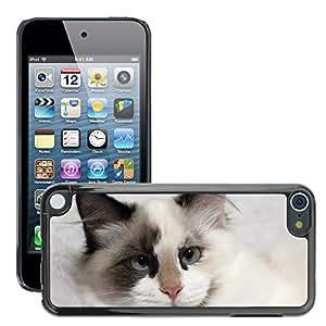 Etui Housse Coque de Protection Cover Rigide pour // M00110935 Gatito del gato felino gatito animal // Apple ipod Touch 5 5G 5th