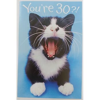 Funny Humor Cute Kitty Cat Happy Birthday Greeting Card