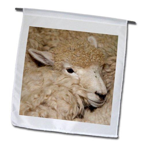 Danita Delimont - Sheep - Merino Sheep, National Museum of Sheep and Shearing, New Zealand. - 18 x 27 inch Garden Flag (fl_208018_2)