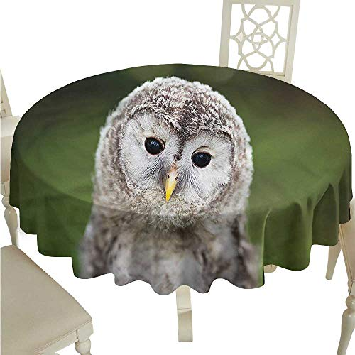 (ScottDecor Christmas Tablecloth Cute,Tawny Owl in a Green Forest Outdoor Picnics Round Tablecloth D 70