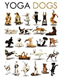 Best The  Posters - Posters: Dogs Mini Poster - Yoga, Upward Facing Review