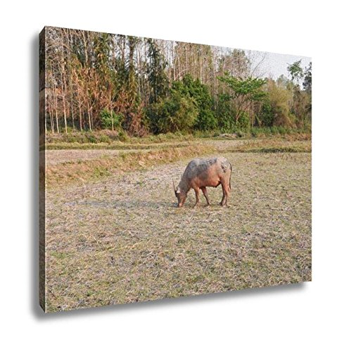 Ashley Canvas, View Of The Buffalo Is In The Farm, Home Decoration Office, Ready to Hang, 20x25, AG6345529 by Ashley Canvas