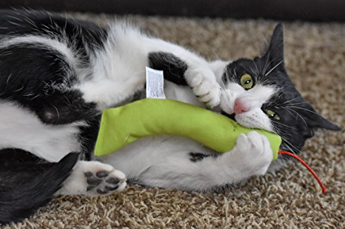 OurPets 100-Percent Catnip Filled Snake Cat Toy, Miles