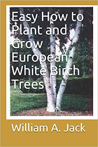 Buy Easy How To Plant And Grow European White Birch Trees Trees For