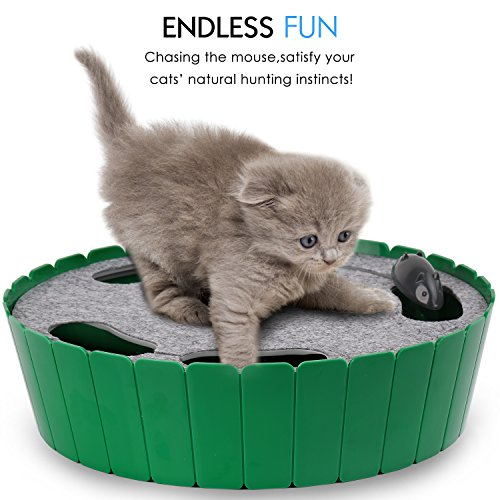 Top 10 Best Battery Operated Toys For Cats