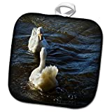 3dRose WhiteOaks Photography and Artwork - Ducks - Mirror Mirror is a photo of two ducks looking at each other - 8x8 Potholder (phl_265328_1)