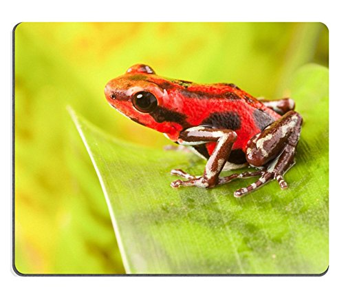 MSD Customized Natural Rubber Mouse Pad Personalized Custom Picture red strawberry poison dart frog tropical amphibian from jungle of Panama These rain forest animals are poisonous pets kept in a terr