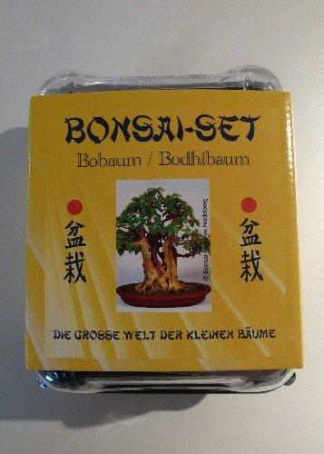 Tropica - Bonsai-Set - Bobaum mit Samen, Keramikschale, Broschüre und Gewächshaus