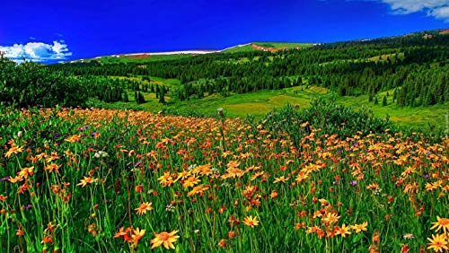 Buy Avikalp Exclusive Awi2149 Spring Mountain Flowers Meadow With Green Grass Forest With Pine Trees Clear Sky Full Hd 3d Wallpaper 4 X 3 Feet Online At Low Prices In India Amazon In