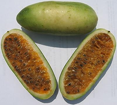 Banana Passion Fruit Seeds - Rare Tropical - Passiflora Mollissima - 10 Seeds