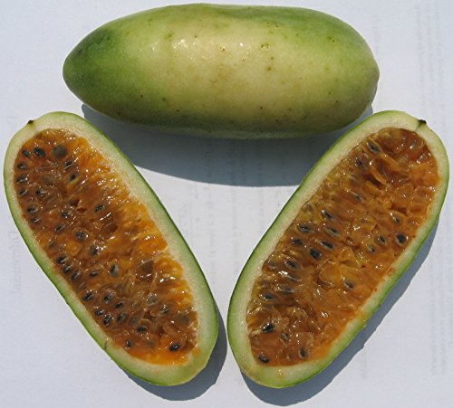 banana-passion-fruit-seeds-rare-tropical-passiflora-mollissima-theseedhouse-excusive-10-seeds