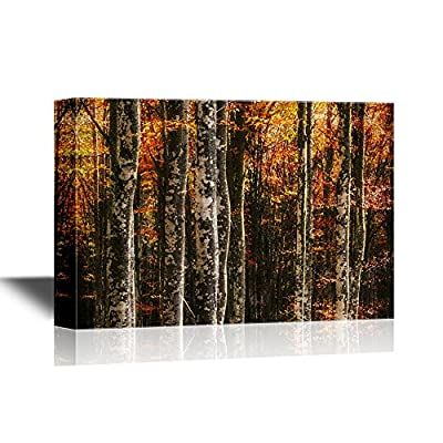 Marvelous Visual, Forest Beech Trees in Autumn, Created Just For You
