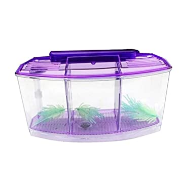 WASPEU Mini Tanque de Pesca para Goldfish Betta pequeños Peces ...