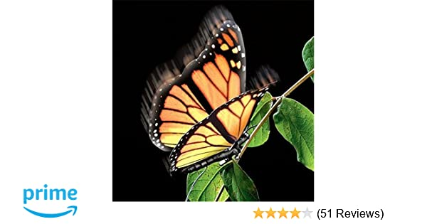 e92b3a9771665 Amazon.com: Elegant Aliform Monarch Moving Butterfly: Toys & Games