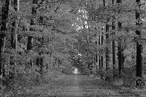 葉に覆われた道路の壁紙-自然の壁紙-#14001 - 白黒の キャンバス ステッカー 印刷 壁紙ポスター はがせるシール式 写真 特大 絵画 壁飾り120cmx80cm