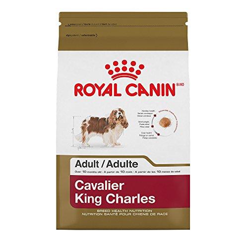 Cavalier King Charles Breed (Royal Canin 510810 Breed Health Nutrition Cavalier King Charles Adult Dry Dog Food, 10 lb)