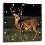 3dRose dpp_94585_3 White-Tailed Deer, Choke Canyon SP, Texas-US44 RNU0292-Rolf Nussbaumer-Wall Clock, 15 by 15-Inch Review