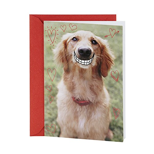 Hallmark Shoebox Valentine's Day Greeting Card (Smiling Dog)