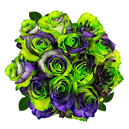 FRESH Tinted Roses| Green, Purple and Black| 25 stems (Earth Rose) Magnaflor - XXL Blooms| Bunch| 10-12 days vase Life by Magnaflor - Wholesale Roses & More