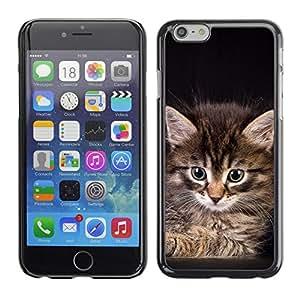 PC/Aluminum Funda Carcasa protectora para Apple Iphone 6 Maine Coon Kitten American Longhair / JUSTGO PHONE PROTECTOR