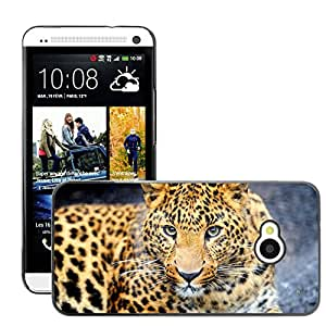 Hot Style Cell Phone PC Hard Case Cover // M00046732 leopard animals wild // HTC ONE M7