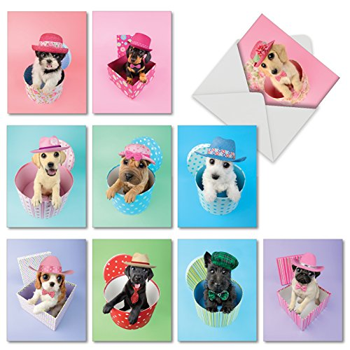 10 Adorable 'Hat Dogs' Puppy Birthday Cards with Envelopes - Assorted Boxed Note Cards - Animal Birthday Card Stationery for Babies, Kids and Birthday Parties 4 x 5.12 inch - NobleWorks M2955BDG