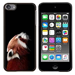 For Apple iPod Touch 6 6th Generation - Little Red Panda Bear Cute Face Portrait Animal Case Cover Protection Design Ultra Slim Snap on Hard Plastic - God Garden -